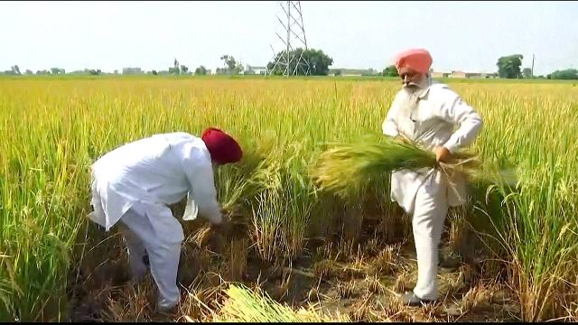 India's farmers frustrated by insufficient government help