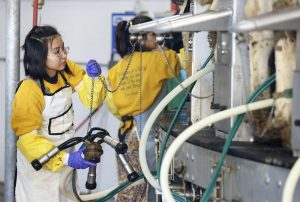 Students from India learn US dairy practices
