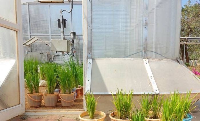 How can crops adapt to climate change and still feed the world? This Hyderabad institute has some answers